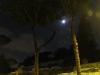 Alberi vicino Colosseo